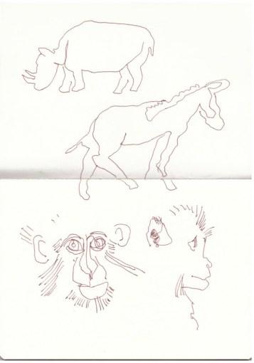 Im Zoo - Nashörner - Affen - Zebra (c) Zeichnung von Susanne Haun