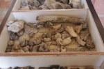 Archäologie, die ich mag (c) Foto von Susanne Haun