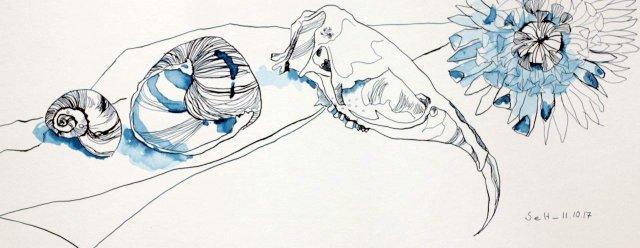 Vanitas Stillleben Tag 1 Zeichnung Von Susanne Haun Susanne Haun