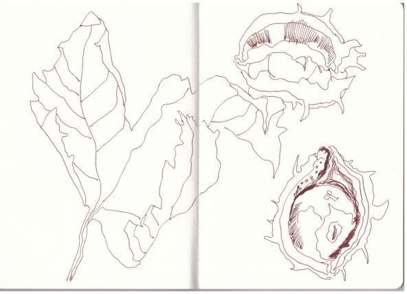 Kastanien (c) Zeichnung von Susanne Haun