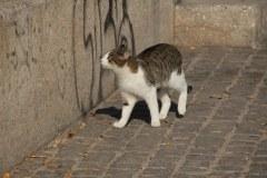 Athen Katze vor dem Akropolis Museum (c) Foto von Susanne Haun