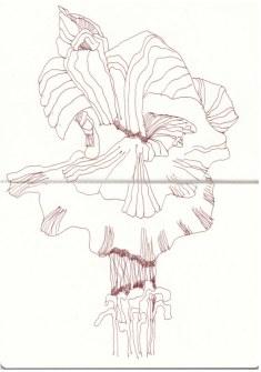 Pilze in Papas Garten (c) Zeichnung von Susanne Haun