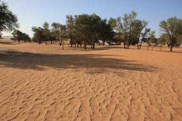 Der Sand gibt die Windrichtung an (c) Foto von Susanne Haun