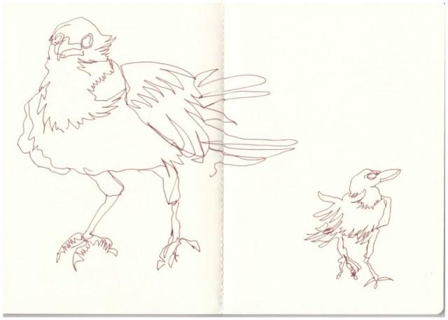 Afrikanische Krähen in der Namib Wueste - aus dem Skizzenbuch (c) Zeichnung von Susanne Haun