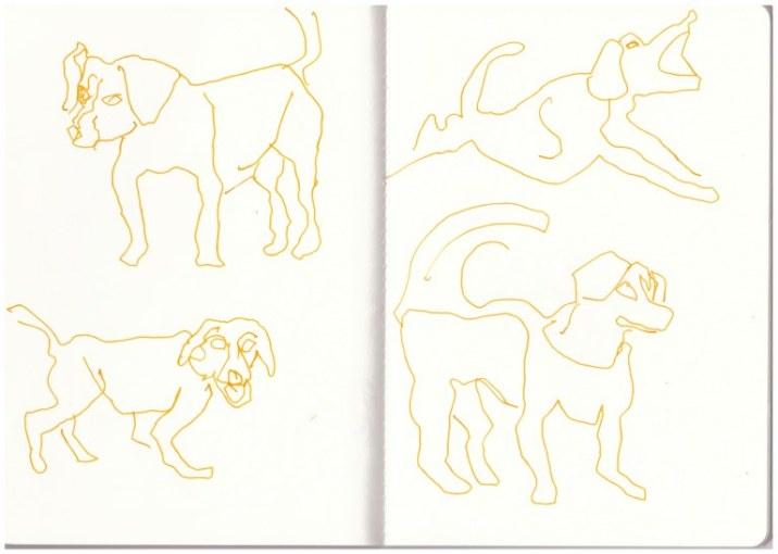 Beagle aus dem Skizzenbuch (c) Zeichnung von Susanne Haun