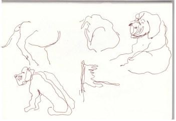 Von Kapstadt zu Cederland zu Orange River (c) Zeichnung von Susanne Haun