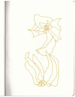 Physalis - Kapstachelbeere (c) Zeichnung von Susanne Haun