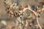 Die Wueste in Namibia lebt (c) Foto von Susanne Haun
