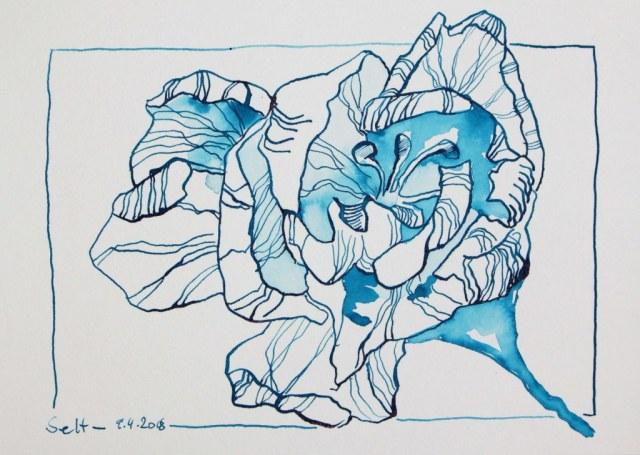 Blaue Fresien - Tusche auf Hahnemühle Aquarellkarton - 17 x 22 cm (c) Zeichnung von Susanne Haun