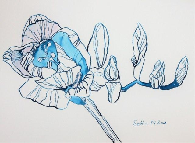 Blaue Fresien - Tusche auf Hahnemühle Aquarellkarton - 31 x 23 cm (c) Zeichnung von Susanne Haun