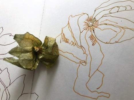 Ich mag die Blätter der Physalis (c) Foto von Susanne Haun