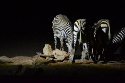 Zebras in der Nacht am Wasserloch in der Namib Wüste (c) Foto von M.Fanke