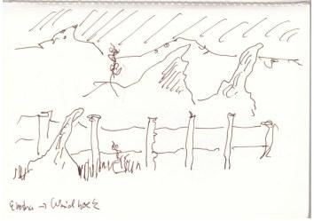 Von Etosha nach Windhoek (c) Zeichnung von Susanne Haun