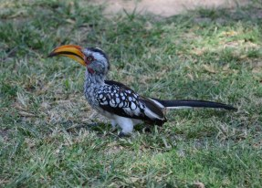 Vogel im Etosha Nationalpark (c) Foto von M.Fanke