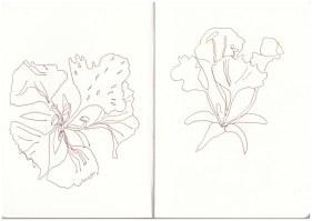 Blumen auf dem Campingplatz (c) Zeichnung von Susanne Haun