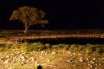 In der Nacht am tierlosen Wasserloch im Etosha Nationalpark (c) Foto von M.Fanke