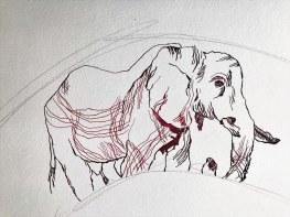 Afrika verarbeiten - Entstehung Elefanten (c) Zeichnung von Susanne Haun