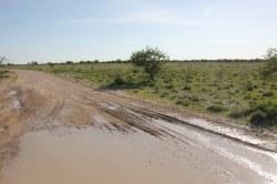 Überall Wasser im Etosha Nationalpark (c) Foto von Susanne Haun