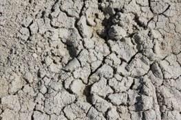Boden der Etosha-Pfanne (c) Foto von Susanne Haun