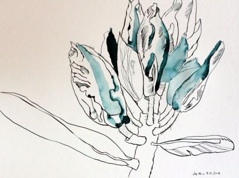 Rhododendron - 30 x 40 cm - Tusche auf Hahnemühle Aquarellkarton Burgund (c) Zeichnung von Susanne Haun