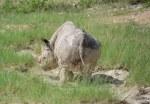 Nashorn im Etosha Nationalpark (c) Foto von M.Fanke