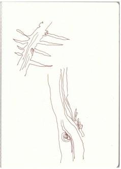 Florale Studien (c) Zeichnung von Susanne Haun