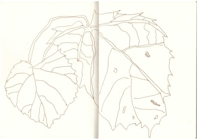 Kaskaden von Blaettern (c) Zeichnung von Susanne Haun