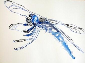 Libelle, 30 x 40 cm, Tusche auf Hahnemühle Aquarellkarton, 2018 (c) Zeichnung von Susanne Haun