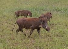 Dieses Tier gehört zu den ugly five (c) Foto von Susanne Haun