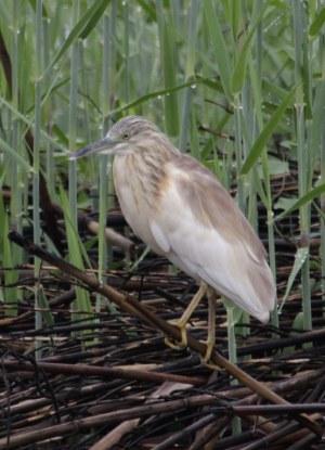 Vogel im Okavango Delta Botswana (c) Foto von Susanne Haun