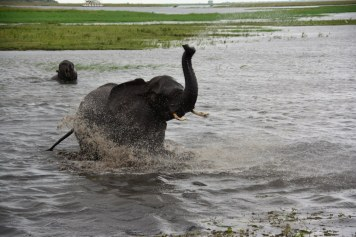 17 Elefanten beim Wasser im Chobe Nationalpark in Botswana (c) Foto von M. Fanke