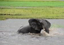 19 Elefanten beim Wasser im Chobe Nationalpark in Botswana (c) Foto von M. Fanke