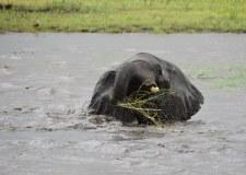 20 Elefanten beim Wasser im Chobe Nationalpark in Botswana (c) Foto von M. Fanke