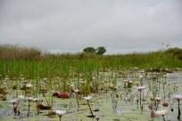 Okavango Delta Botswana (c) Foto von M.Fanke