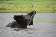 21 Elefanten beim Wasser im Chobe Nationalpark in Botswana (c) Foto von M. Fanke