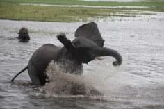 22 Elefanten beim Wasser im Chobe Nationalpark in Botswana (c) Foto von Susanne Haun