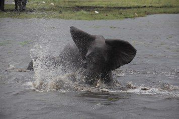 24 Elefanten beim Wasser im Chobe Nationalpark in Botswana (c) Foto von Susanne Haun