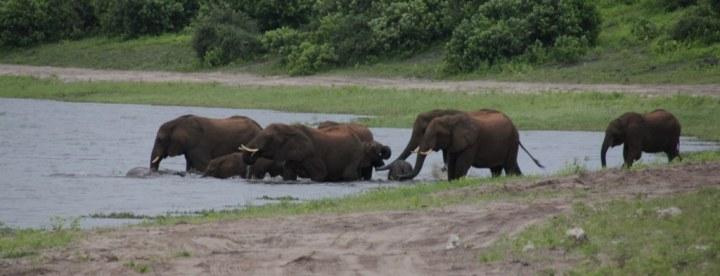 Elefanten beim Wasser im Chobe Nationalpark in Botswana (c) Foto von Susanne Haun