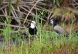 Vögel im Okavango Delta Botswana (c) Foto von M.Fanke