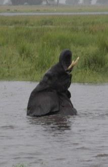 30 Elefanten beim Wasser im Chobe Nationalpark in Botswana (c) Foto von Susanne Haun