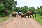 Elefanten im Chobe Nationalpark in Botswana (c) Foto von M. Fanke