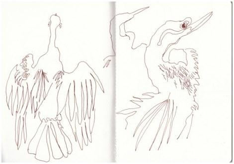 Kormorane im Chobe Nationalpark (c) Zeichnung von Susanne Haun