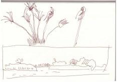Afrika - Botswana - Im Okavonga Delta (c) Zeichnung von Susanne Haun