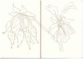 Auf dem Balkon - Geranien (c) Zeichnung von Susanne Haun