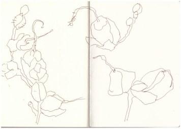 Auf dem Balkon - Löwenmäulchen (c) Zeichnung von Susanne Haun
