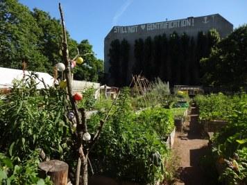 Ein kleines Paradies, der urban garden Himmelbeet in Berlin Wedding (c) Foto von Susanne Haun