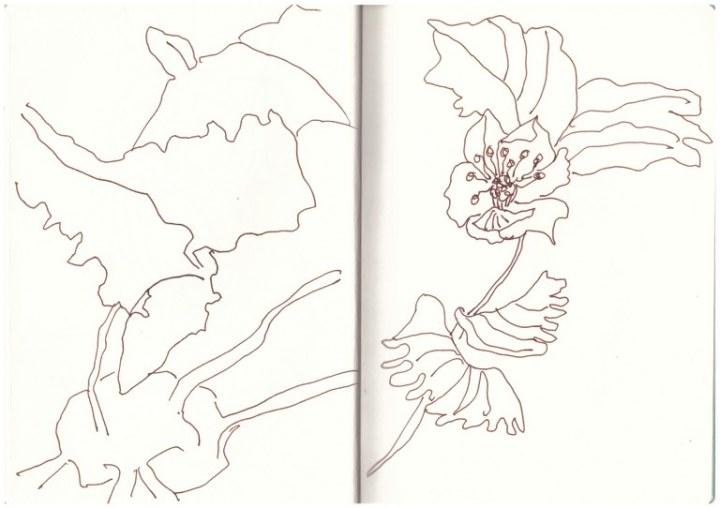 Pflanzen im Himmelbeet zeichnen - urbangarden (c) Zeichnung von Susanne Haun