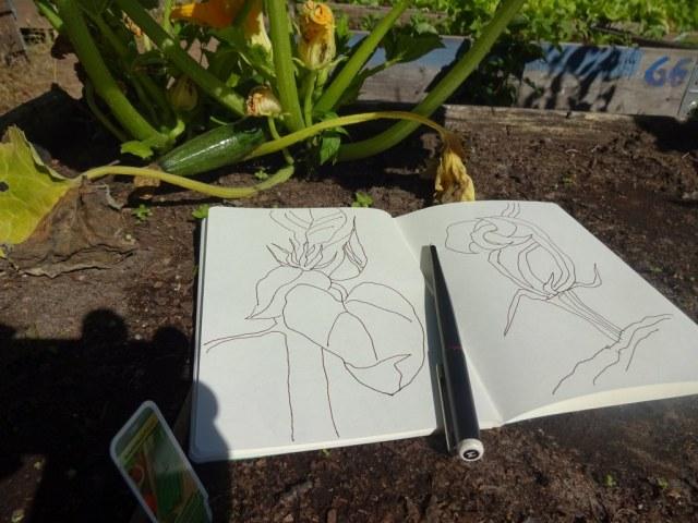 Zeichnen im Himmelbeet (c) Foto und Zeichnung von Susanne Haun