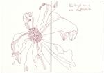 Balkonblumen (c) Zeichnung von Suanne Haun