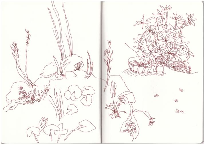 Teich in Papas Garten (c) Zeichnung von Susanne Haun
